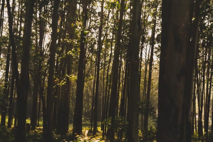 Munnar forest
